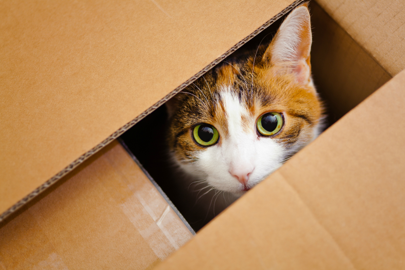 Moving Kit for Cats