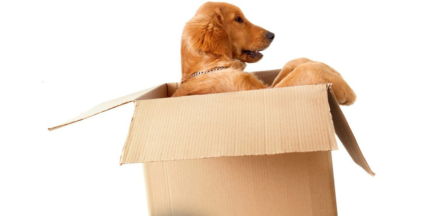 Moving Kit for Dogs