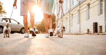 Dog-Friendly Cities in America