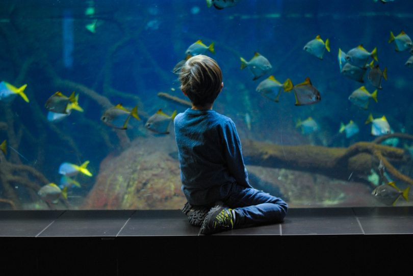 Tips For Moving a Fish Tank To a New Home