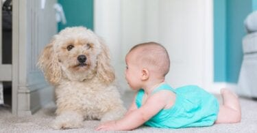 Baby and dog after moving