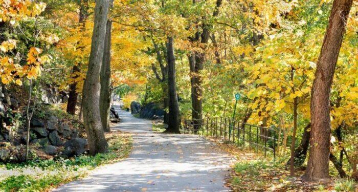 autumn highbridge park washington heights nyc