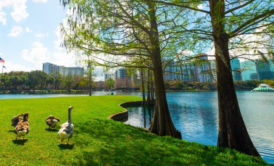 thornton park orlando ducks